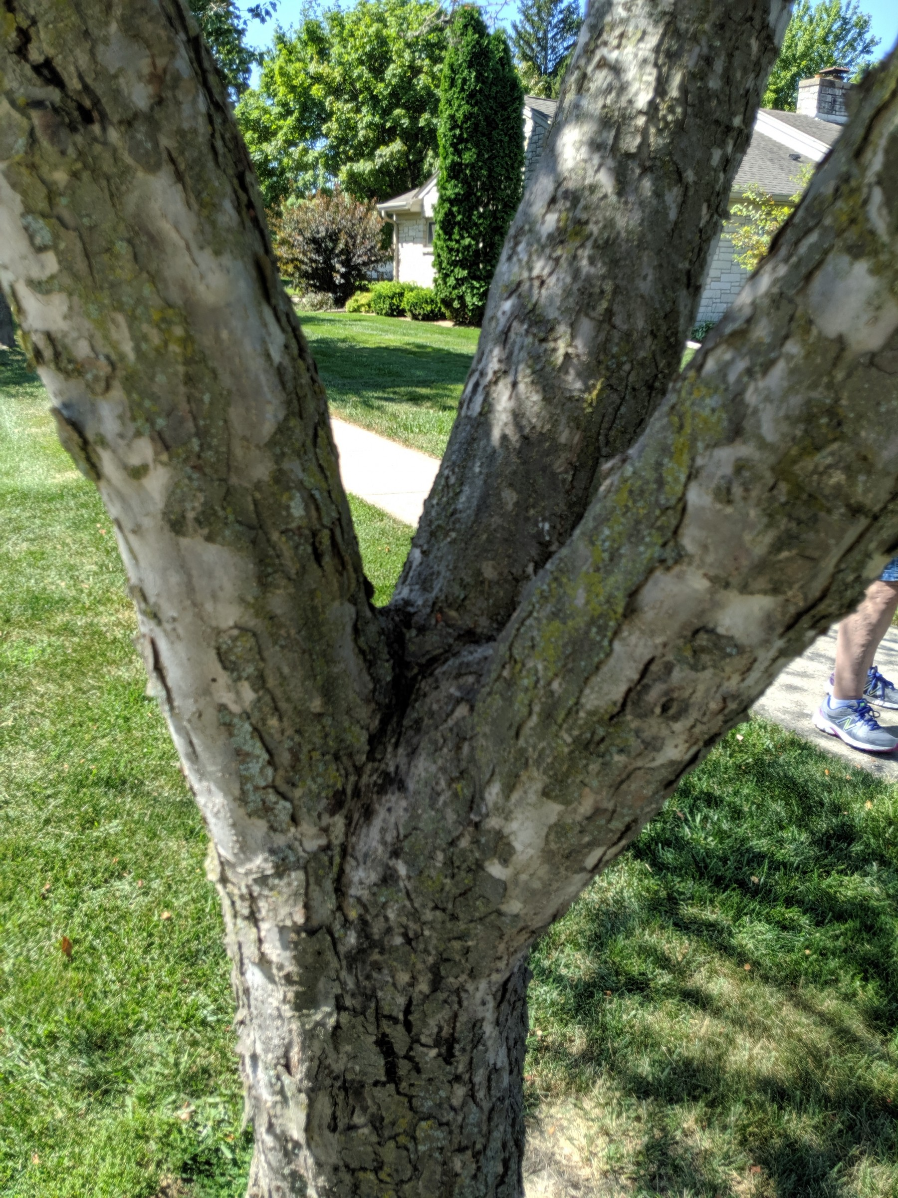 Crabapple And Apple Tree Issues Plantdoc